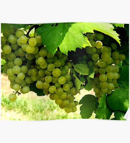Green Grapes  ^ Poster