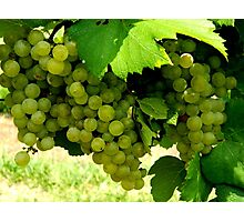 Green Grapes  ^ Photographic Print