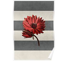 botanical stripes - red water lily Poster