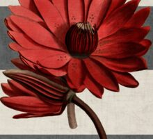 botanical stripes - red water lily Sticker