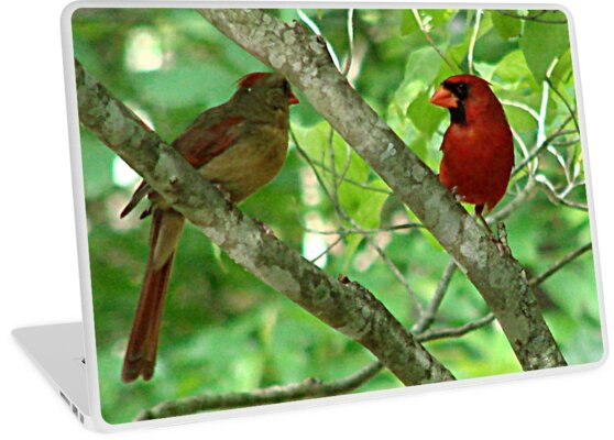 Northern Cardinal Pair - female and male by Jean Gregory  Evans
