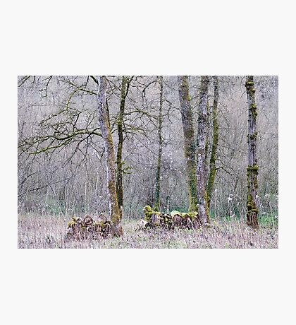 Early spring in the forest Photographic Print