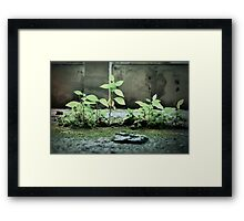 Compact forest Framed Print