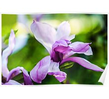 Magnolia Abstract Art Poster