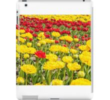 red and yellow tulips growing in the flowerbed iPad Case/Skin