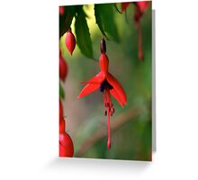 Single Wild Fuchsia Flower, Loch Na Fooey Greeting Card