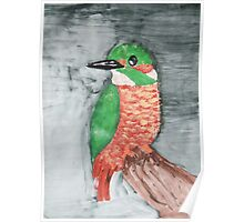 Colorful Red and Green Kingfisher Bird Poster