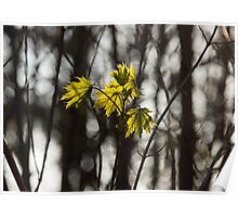 Green Spring - First Leaves in the Forest Poster