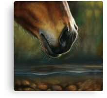 Equine Nose Canvas Print