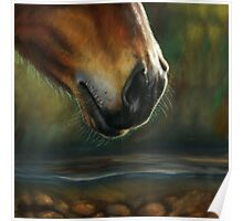 Equine Nose Poster