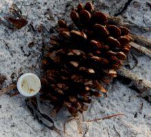 Pine cone on the beach Sticker
