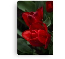 Rainy Spring Garden with Vivid Red Tulips Canvas Print