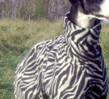 My zebra girl Sticker