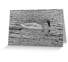 Trumpeter Swan (BW) Greeting Card