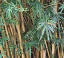 Bamboo Love Sticker