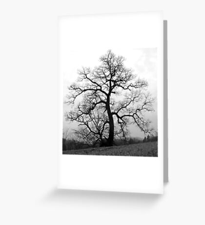 WINTER PRINCESS TREE Greeting Card