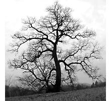 WINTER PRINCESS TREE Photographic Print