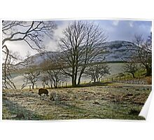 Wintry Morning Poster