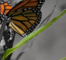 Monarch Butterfly 2 Sticker