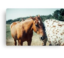 Two Horses on a French Farm Canvas Print