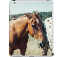 Two Horses on a French Farm iPad Case/Skin