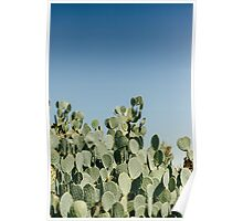 Large Prickly Pear Cactus against Blue Sky Poster