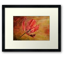 Tulip In Flames Framed Print