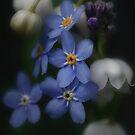 Spring by EbyArts