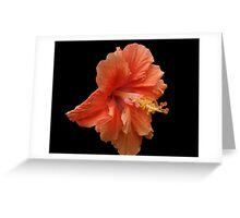 Double Orange Hibiscus DPG160419 Greeting Card