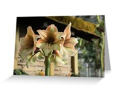 Pale Pastel Amaryllis  Greeting Card