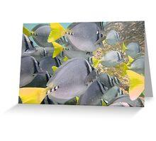 Galapagos Fish Greeting Card