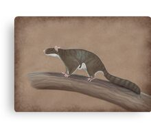 Volaticotherium antiquum - extinct gliding mammal Canvas Print