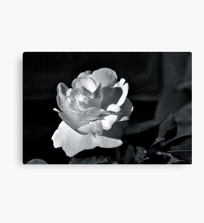 Black Magic (B&W) Canvas Print