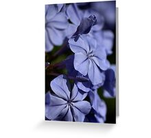 Turned Blue Greeting Card