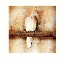 Dove in the Barn Art Print
