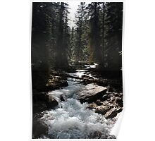 Alberta Forest Poster