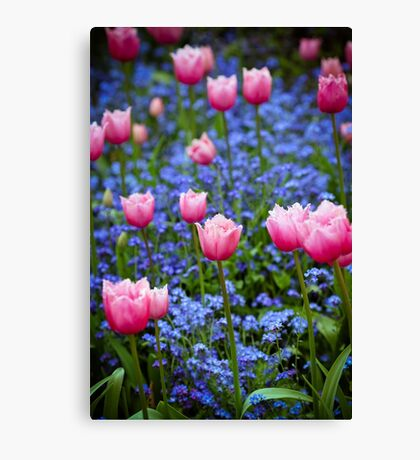 Pink Tulips in Blue Canvas Print