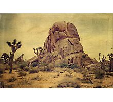 Joshua Trees In The Desert Photographic Print
