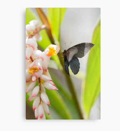 butterfly on the flower Metal Print