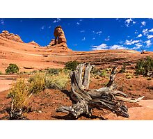 Delicate Arch From Below Photographic Print