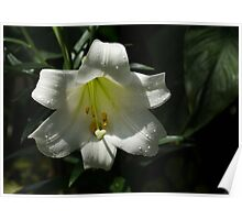 Of Water Pearls and Easter Lilies Poster