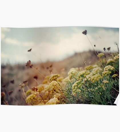 Meadow of Wildflowers Poster