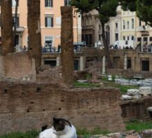 Oh So Rome - Cats, Umbrella Pines and Ancient Ruins Sticker