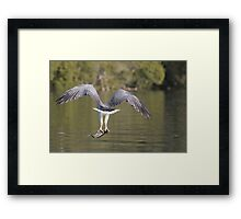 Catch And Gone Framed Print