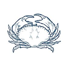 Crab seafood nature ocean aquatic underwater vector. Hand drawn marine engraving illustration on white background Photographic Print