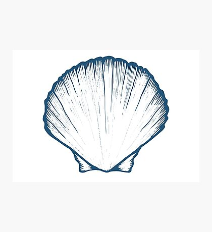 Seashell, sea shell, nature ocean aquatic underwater vector. Hand drawn marine engraving illustration on white background Photographic Print