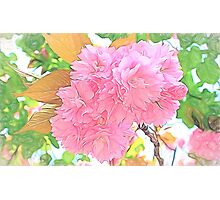 Pink Double Cherry Blossoms ( Pencil Drawing ) Photographic Print