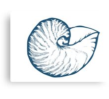 Seashell, sea shell, nature ocean aquatic underwater vector. Hand drawn marine engraving illustration on white background Canvas Print