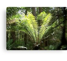 Tree fern Canvas Print