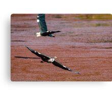 Flying Egrets Canvas Print
